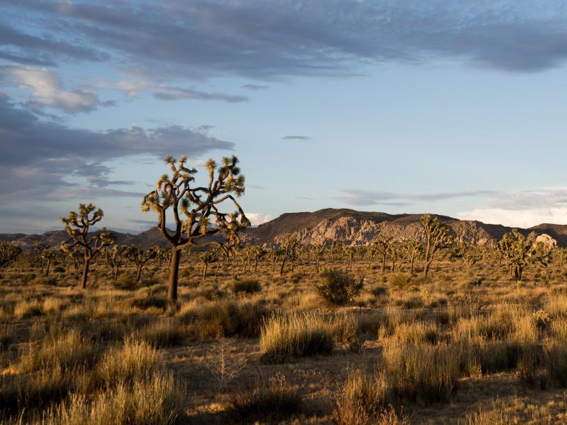 Afbeelding van Joshua Tree National Park