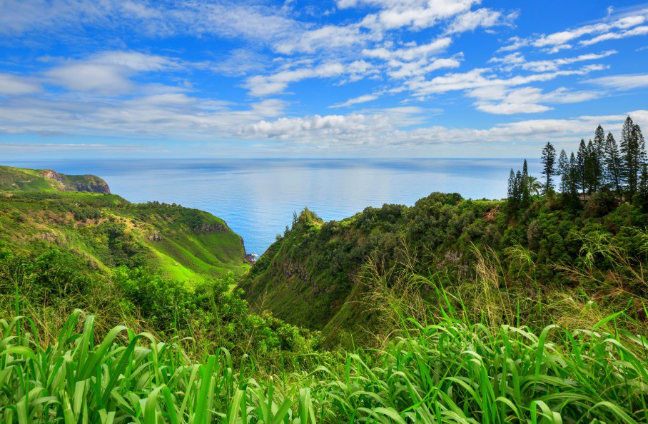 Afbeelding van Maui 3P9QL59