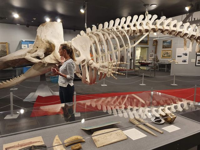 New Bedford whale museum
