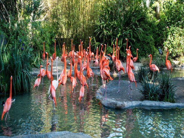 Flamingo's in San Diego Zoo