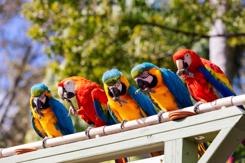 Macaws at ZooTampa at Lowry Park