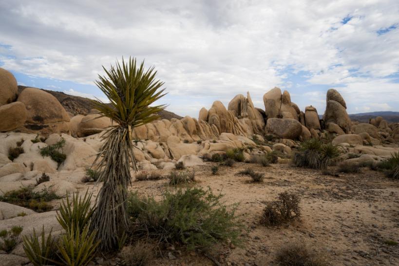 Joshua Tree National Park rotsen