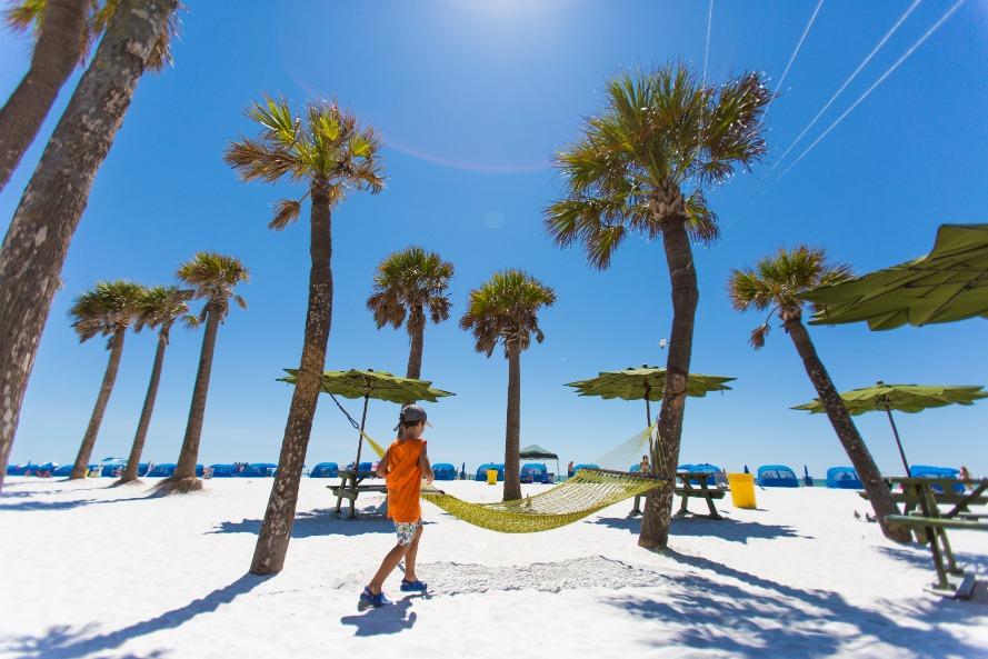 Palm Tree Hammock   Clearwater Beach
