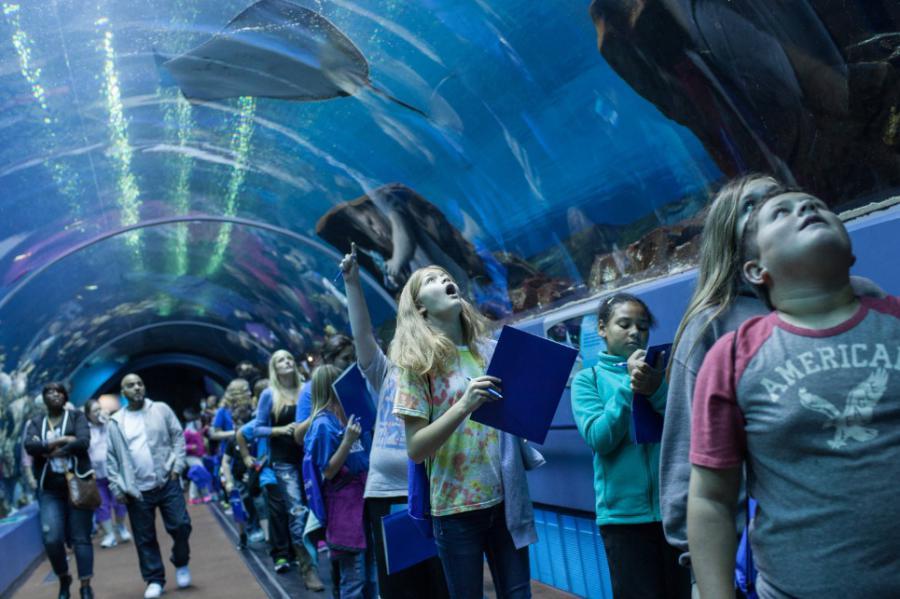 Aquarium Tunnel, vakantie Atlanta