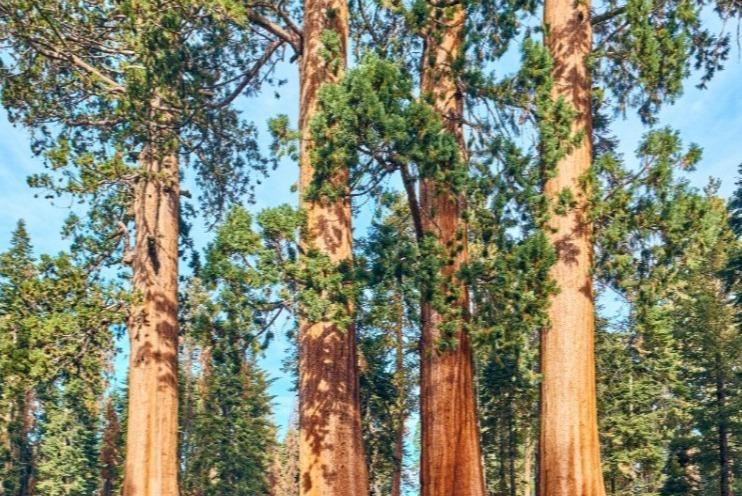 Sequoia National Park in de herfst