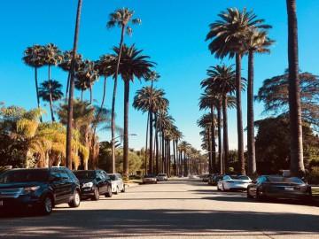 palm bomen in los angeles